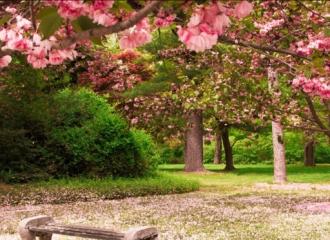 「花海行动」-平谷石林峡踏青赏花1日活动